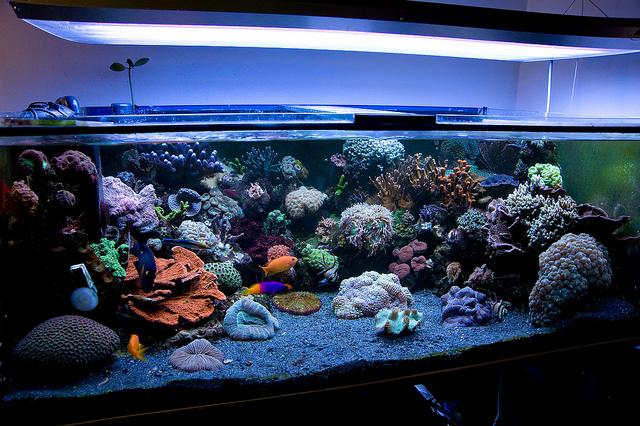 R cif france aquariophilie eau de mer aquarium r cifal for Aquarium bac